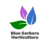 Blue Gerbera Horticulture Ltd